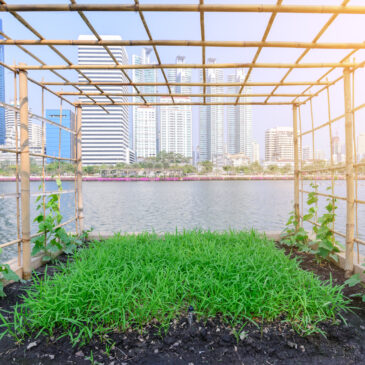 Farm-to-Table Models Grow to New Levels: Urban and City Dwellers Get Sustainable